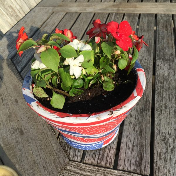 Memorial Day Plant