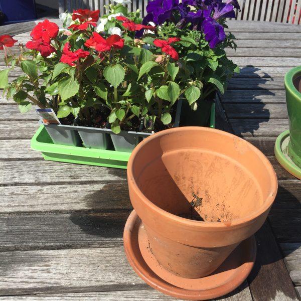 Ceramic Pot and Impatiens
