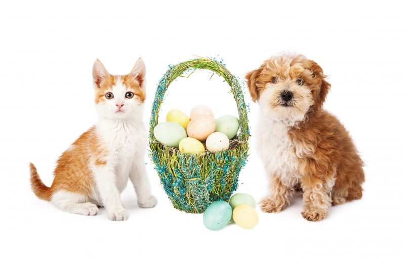 Pets sitting by a pretty Easter basket