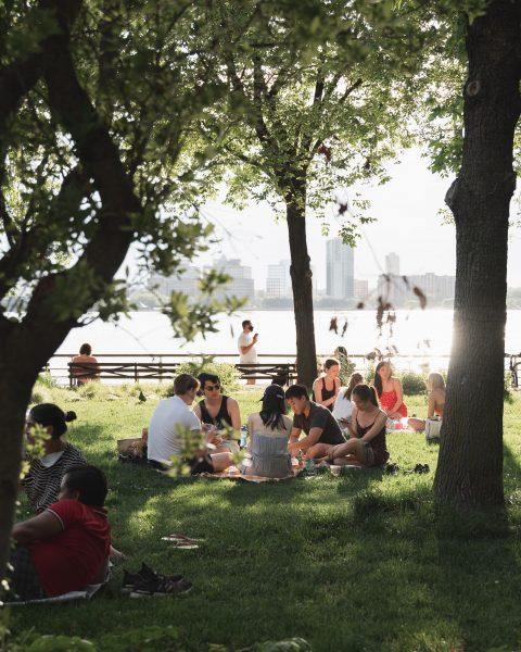 Outdoor picnic scene